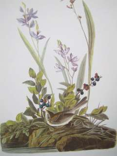 Vintage Audubon Best Loved Bird Prints  Field Sparrow