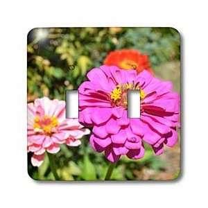 Patricia Sanders Flowers   Pretty Pink Zinnia Flower Flowers Macro
