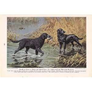 Walter A Weber Curly & Flat Coat Retriever Dog Print Everything Else