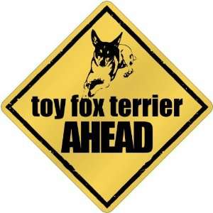 New  Toy Fox Terrier Bites Ahead   Crossing Dog