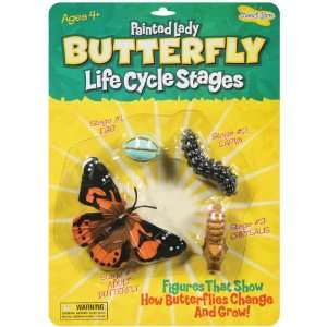 Life Cycle Stages Butterfly (4760): Arts, Crafts & Sewing