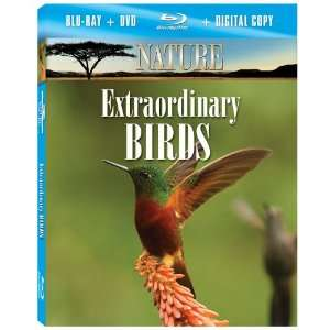 Nature Extraordinary Birds [Blu ray] F. Murray Abraham Movies & TV