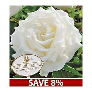 Pope John Paul II Hybrid Tea Rose with Garden Marker