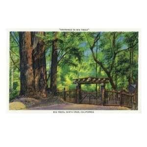 Santa Cruz, California   Big Trees Park Entrance Scene