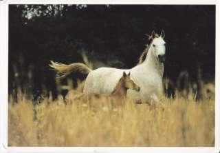 breyer 1446 overo pinto mare foal free parcel post returns. Black Bedroom Furniture Sets. Home Design Ideas